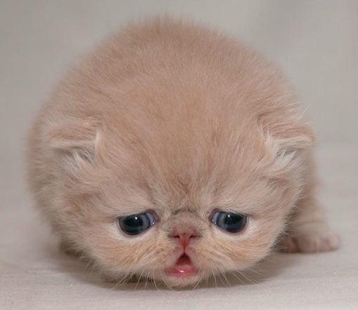 如何照顾幼年小猫?照顾幼年小猫需要注意什么